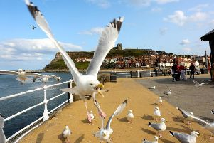 Staring at seagulls makes them less likely to steal your food, a new study has found.