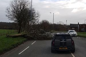 The fallen tree on Carr Mill Road