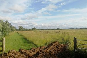 Part of the planned development site between Moss Lane and Flensburg Way could be used for tree-planting
