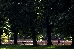 Well-behaved dogs out and about in Avenham and Miller Park