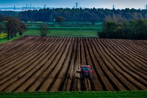 If climate projections prove accurate, the UK could lose nearly 75 per cent of land that is currently well suited for potato production by the 2050s, according to a report by The Climate Coalition. Picture by James Hardisty.