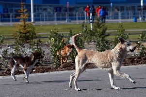 Data from Leeds council has revealed the worst areas in the city for reports of stray dogs. 'Photo: AP