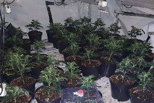 West Yorkshire Police took these pictures of a cannabis factory found in Morley.