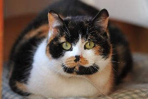 West Yorkshire had the highest number of cat thefts outside of London in 2018.