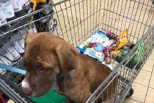 The picture Mr Pearson shared of his dog in the trolley.