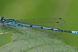Rodley Nature Reserve is named dragonfly hotspot