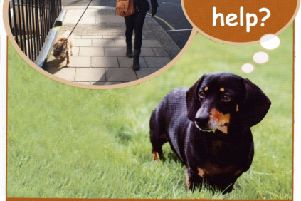 Charity Cinnamon Trust asking for help for the elderly and terminally ill and their pets in Leeds