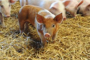The increased demand for high welfare pork could be good news for farmers.