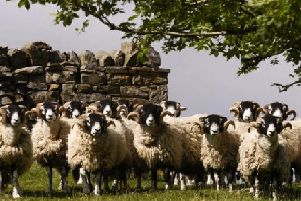 Police are appealing for information after six sheep were killed and a cow attacked in North Yorkshire.