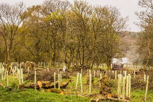 Can families be encouraged to plant more trees?