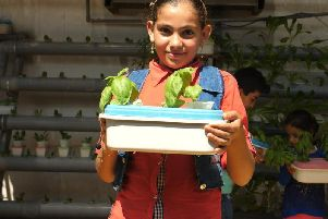 A young girl successfully grows basil at the refugee camp