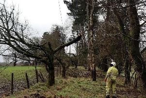 Engineers repairing the electricity network following Storm Ciara
