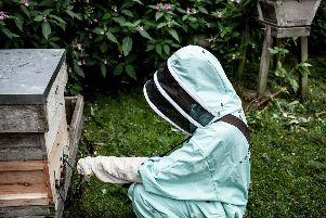 Bees were recorded at Temple Newsam for the Unusual ingredients project.