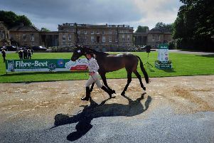Hazel Towers with her horse Simply Clover is pictured on the Trot Out. Picture by Simon Hulme