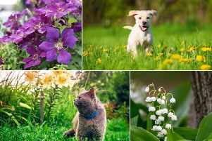 Although many garden and woodland plants are completely harmless for wildlife, there are also some specific poisonous plants which can pose an extreme danger to household pets