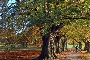 The Stray is one of Harrogate's best assets.