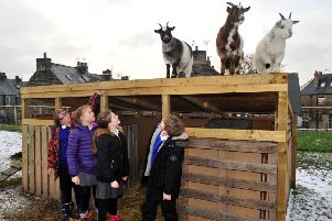 010219  Pupils at New Park Primary Academy school in Harrogate with their  three pygmy goats they have at the school.  For Education page.