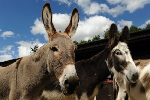 Donkeys at The Donkey Sanctuary in Eccup