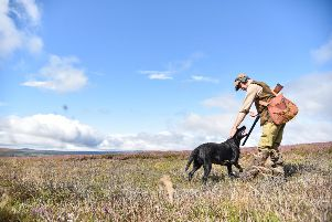 The first grouse shoot of the season last august. Picture: SWNS