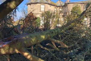 High winds caused by storm Gareth caused the huge tree to fall on a path at Lotherton Hall in Leeds.