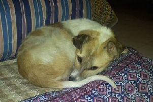 Tariq Shah is raising money to bring Patch home to England and cover the cost of initial vet bills. (s)