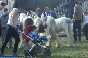 Picture: Kenilworth Gypsy Horse Fair, Facebook.