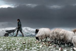 The Shepherdess book for YP magazine