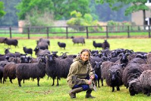 Jo Ropner, the recently appointed Lord Lieutenant for North Yorkshire at the Camp Hill Estate near Bedale, pictured with her flock of Hebridean sheep. Picture by Gary Longbottom.