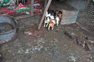 The dogs were being kept in squalid conditions. Photo: Humberside Police.