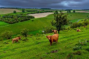 Grazing is important to stop wildflower species being lost by the march of nature, a new study by the Plantlife charity found. Picture by James Hardisty.