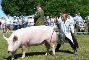 The pig classes at the 144th Driffield Show have been cancelled. Picture by Jonathan Gawthorpe.