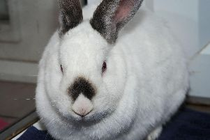 A rabbit was stolen in one crime this week.