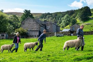Steven, Carol and Will Porter with Swaledales at Summer Lodge Farm, Low Row, Swaledale, preparing for the Muker Show which will be held on Wednesday 4th September. Picture by Bruce Rollinson.